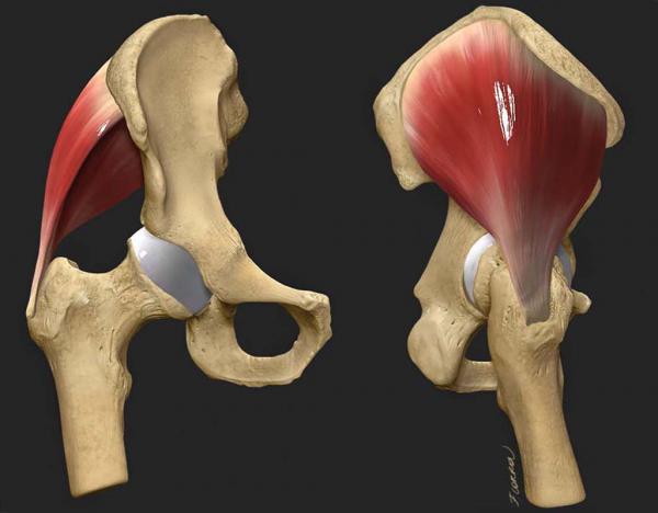 Francesca Corra Medical Illustration 3D hip model